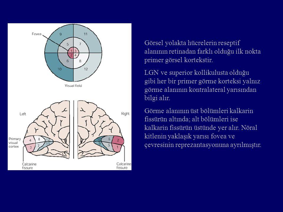 Görsel yolakta hücrelerin reseptif alanının retinadan farklı olduğu ilk nokta primer görsel kortekstir.