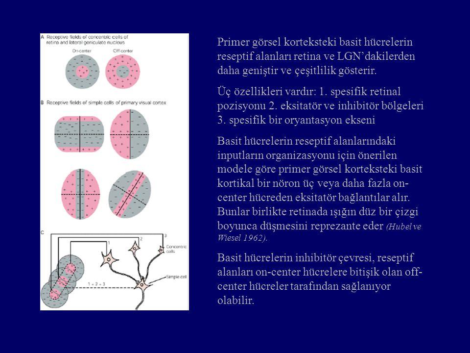 Primer görsel korteksteki basit hücrelerin reseptif alanları retina ve LGN'dakilerden daha geniştir ve çeşitlilik gösterir.