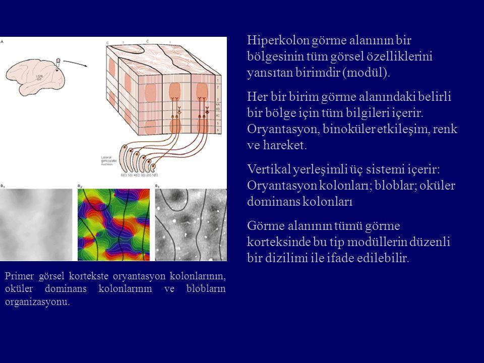 Hiperkolon görme alanının bir bölgesinin tüm görsel özelliklerini yansıtan birimdir (modül).