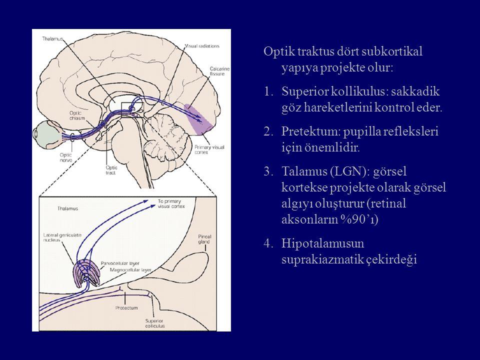 Optik traktus dört subkortikal yapıya projekte olur: