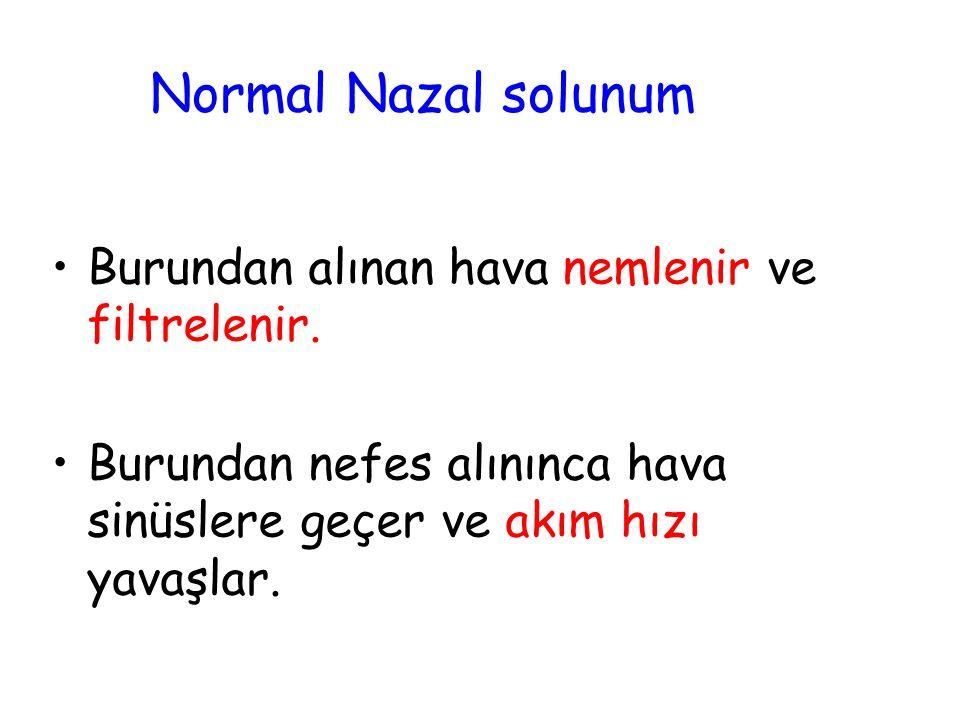 Normal Nazal solunum Burundan alınan hava nemlenir ve filtrelenir.