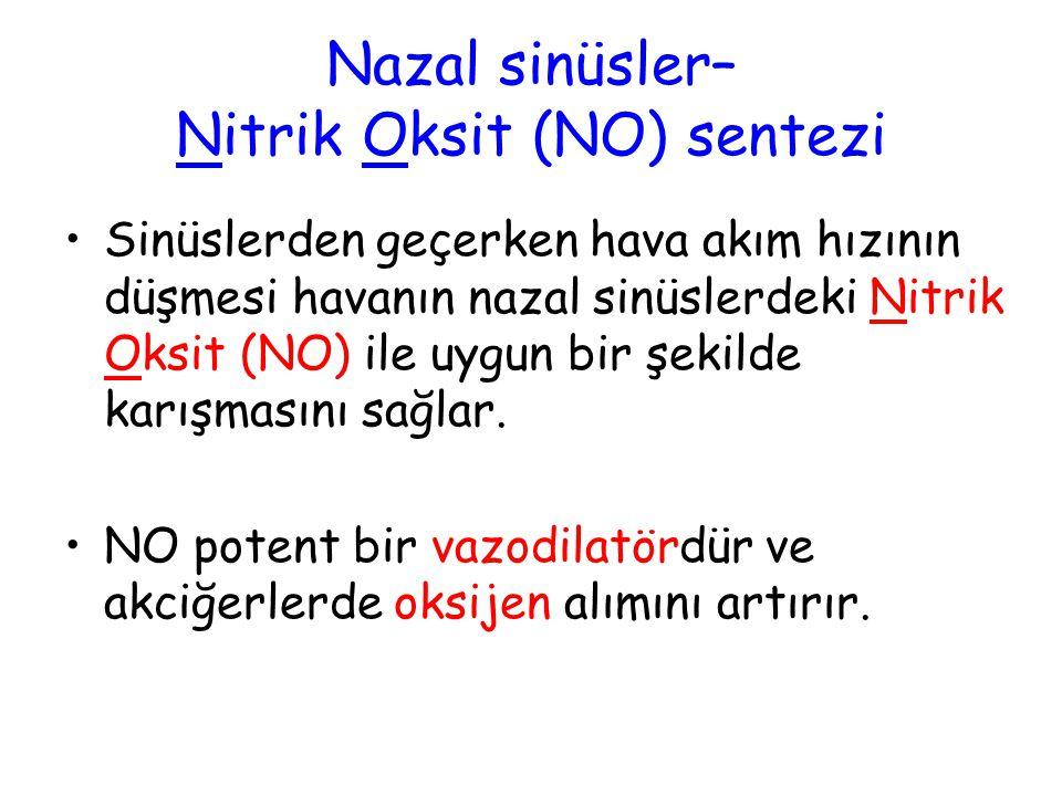 Nazal sinüsler– Nitrik Oksit (NO) sentezi