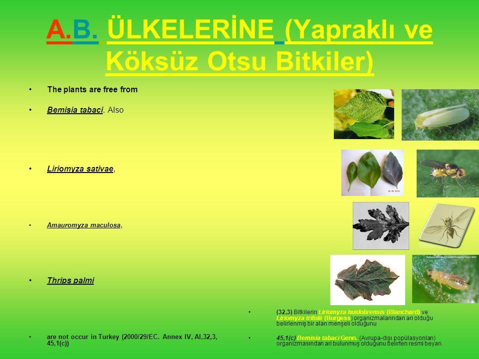 A.B. ÜLKELERİNE (Yapraklı ve Köksüz Otsu Bitkiler)