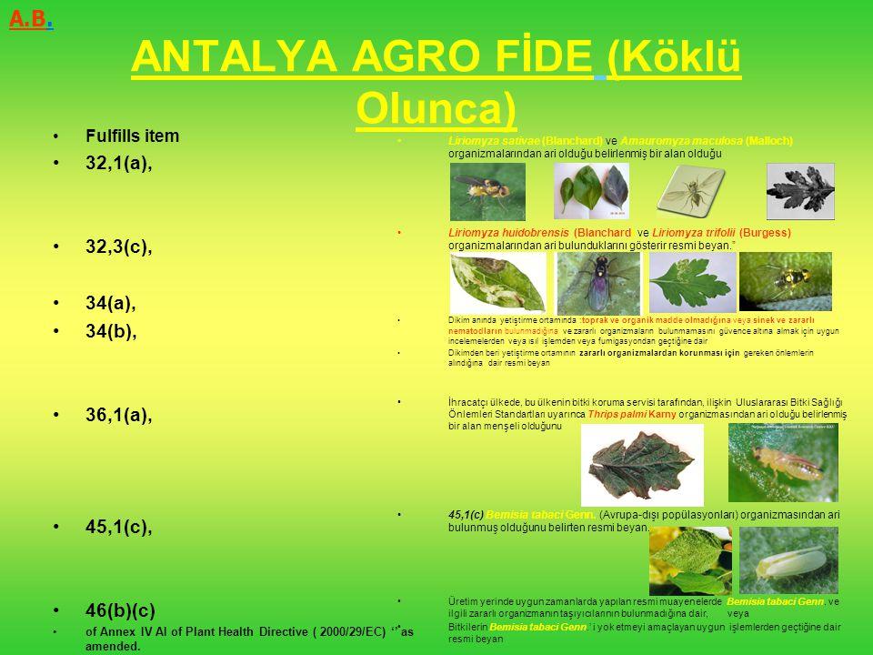 ANTALYA AGRO FİDE (Köklü Olunca)