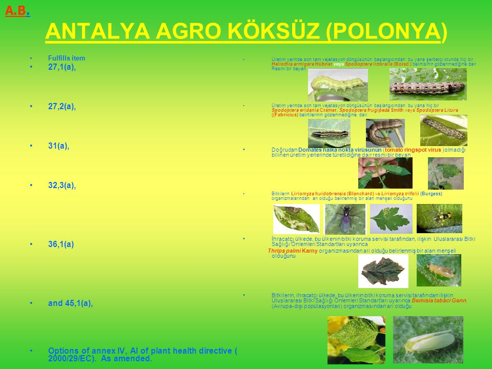 ANTALYA AGRO KÖKSÜZ (POLONYA)