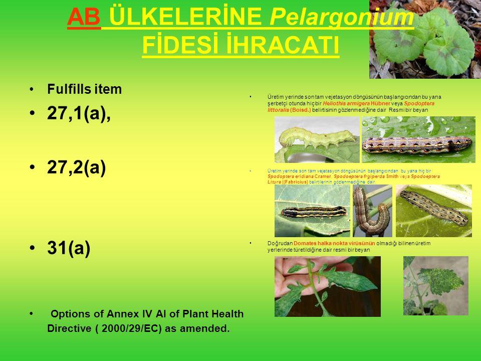 AB ÜLKELERİNE Pelargonium FİDESİ İHRACATI