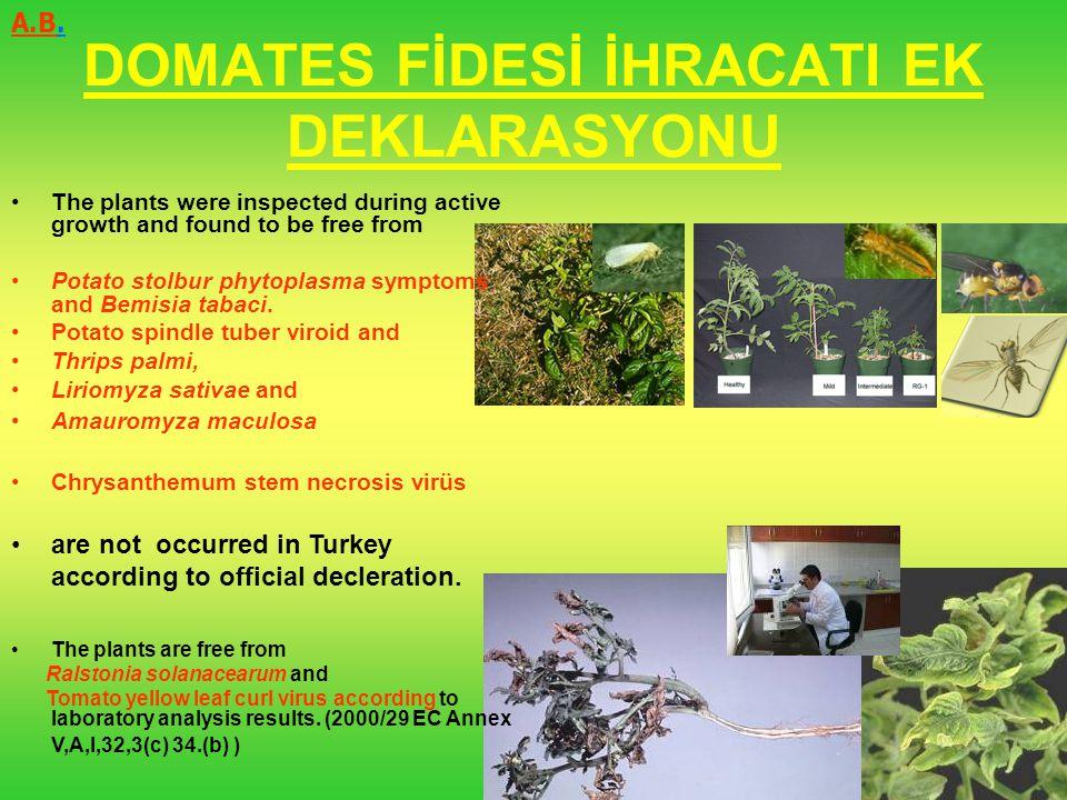 DOMATES FİDESİ İHRACATI EK DEKLARASYONU
