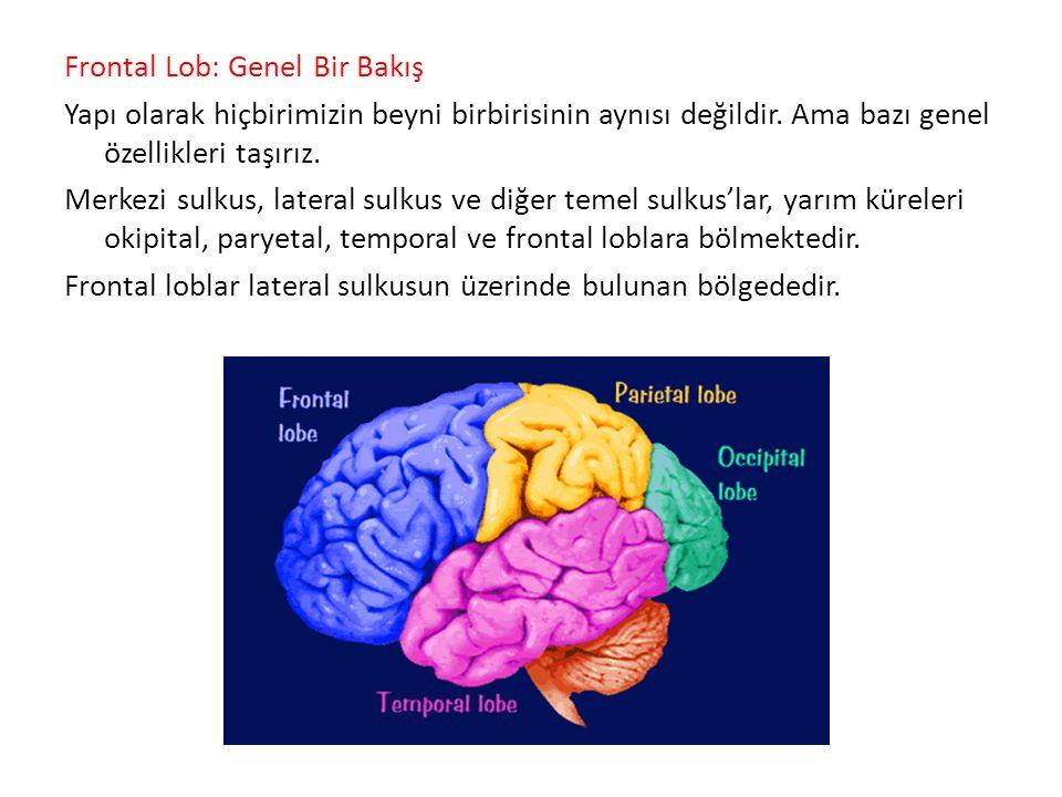 Frontal Lob: Genel Bir Bakış Yapı olarak hiçbirimizin beyni birbirisinin aynısı değildir.