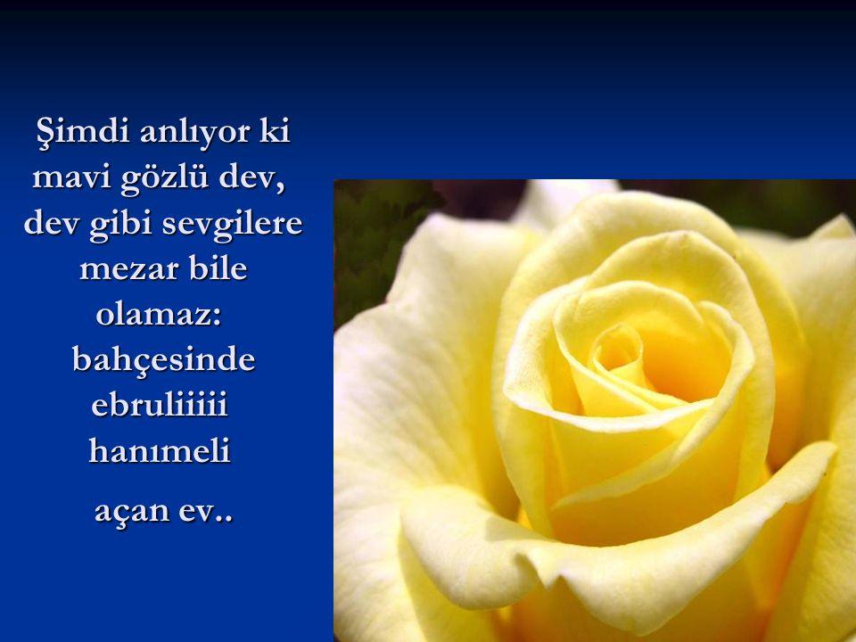 Şimdi anlıyor ki mavi gözlü dev, dev gibi sevgilere mezar bile olamaz: bahçesinde ebruliiiii hanımeli açan ev..
