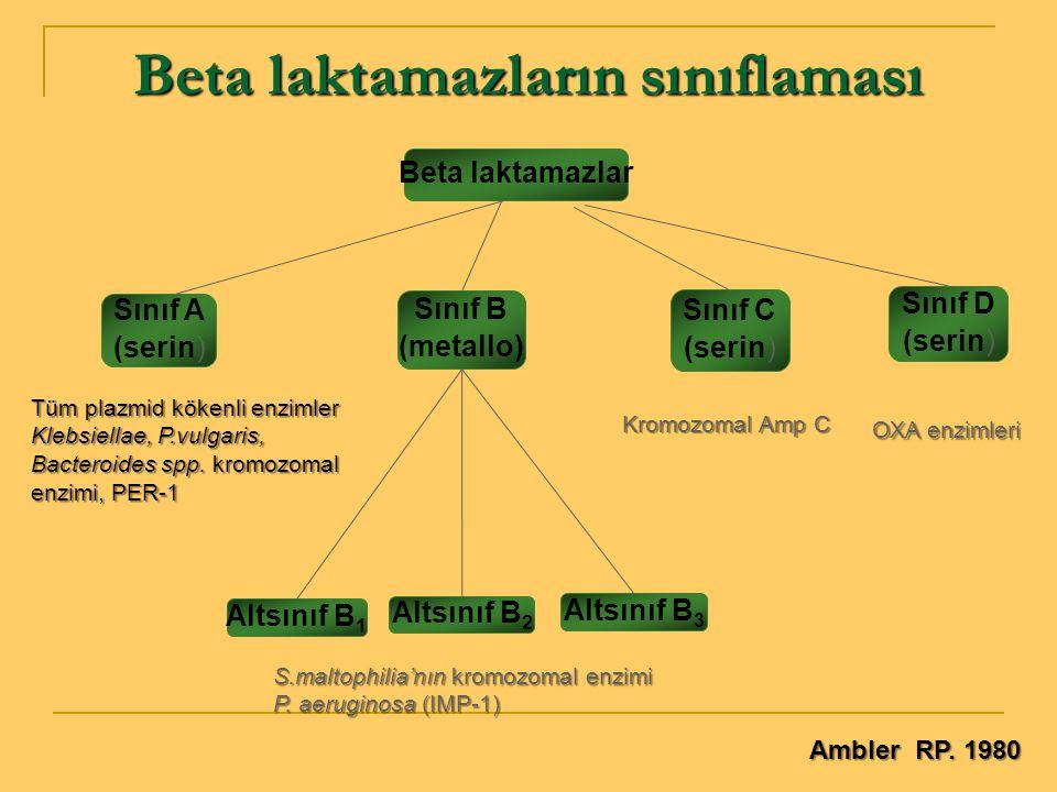 Beta laktamazların sınıflaması