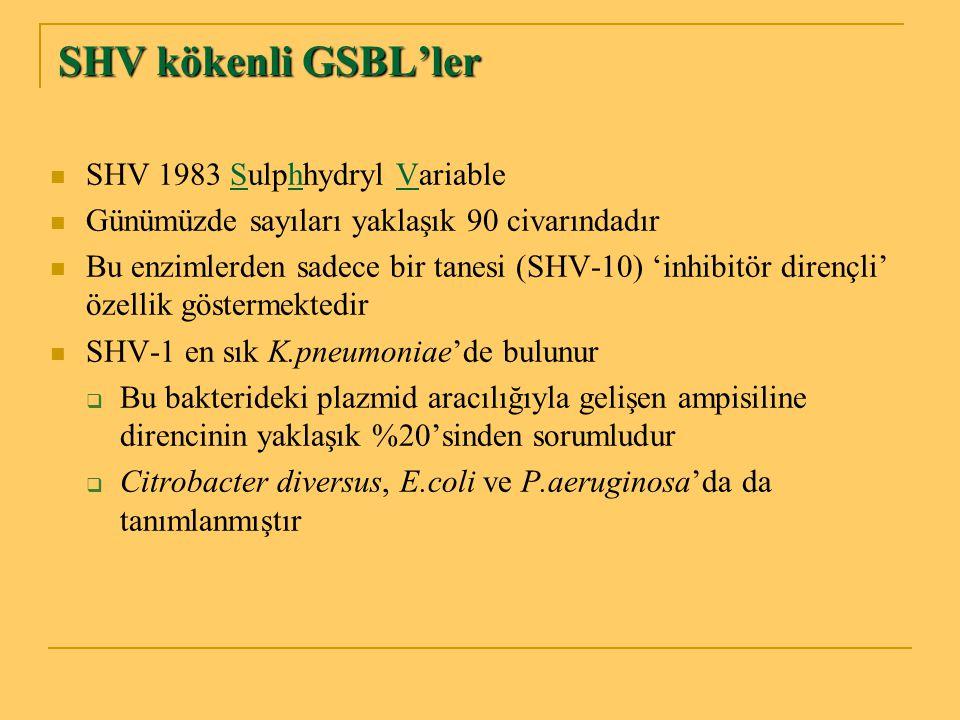 SHV kökenli GSBL'ler SHV 1983 Sulphhydryl Variable