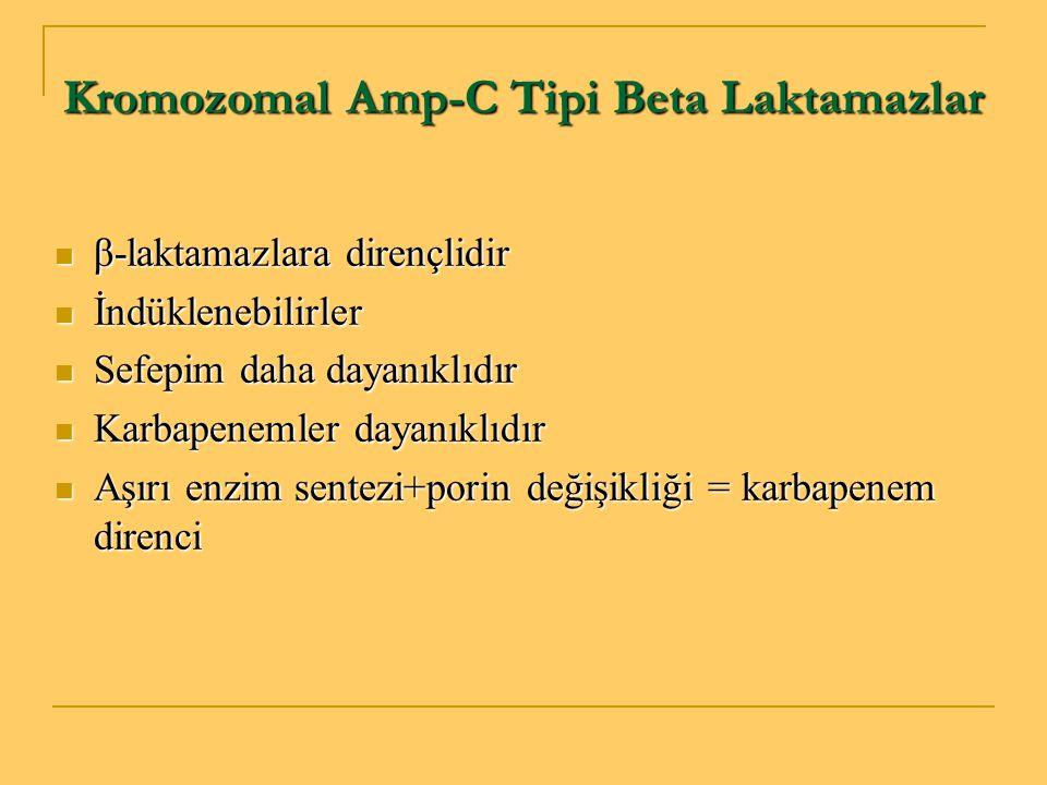 Kromozomal Amp-C Tipi Beta Laktamazlar