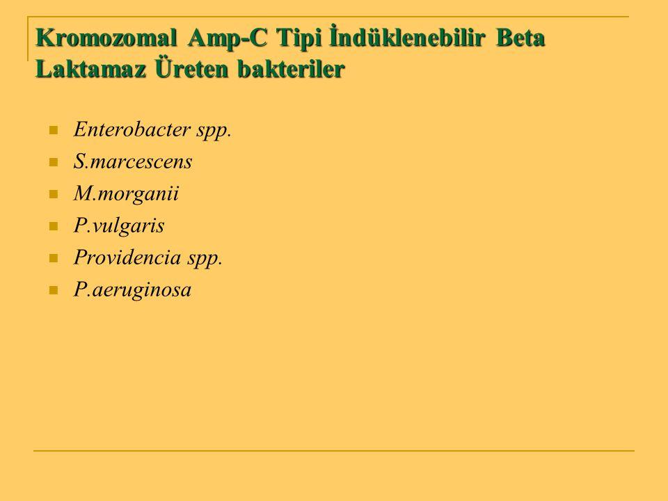 Kromozomal Amp-C Tipi İndüklenebilir Beta Laktamaz Üreten bakteriler