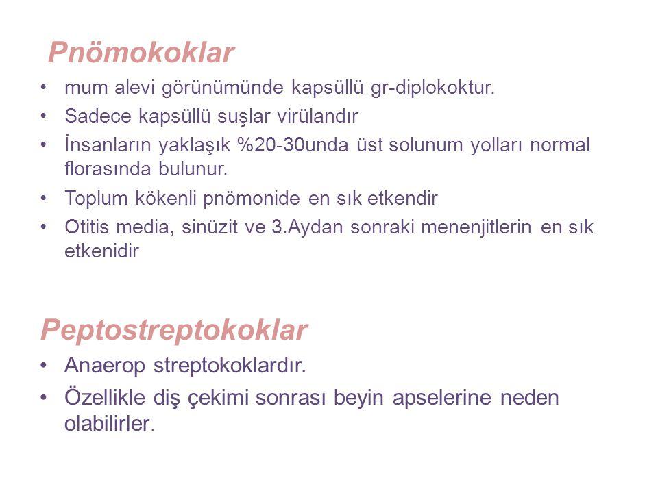 Pnömokoklar Peptostreptokoklar Anaerop streptokoklardır.
