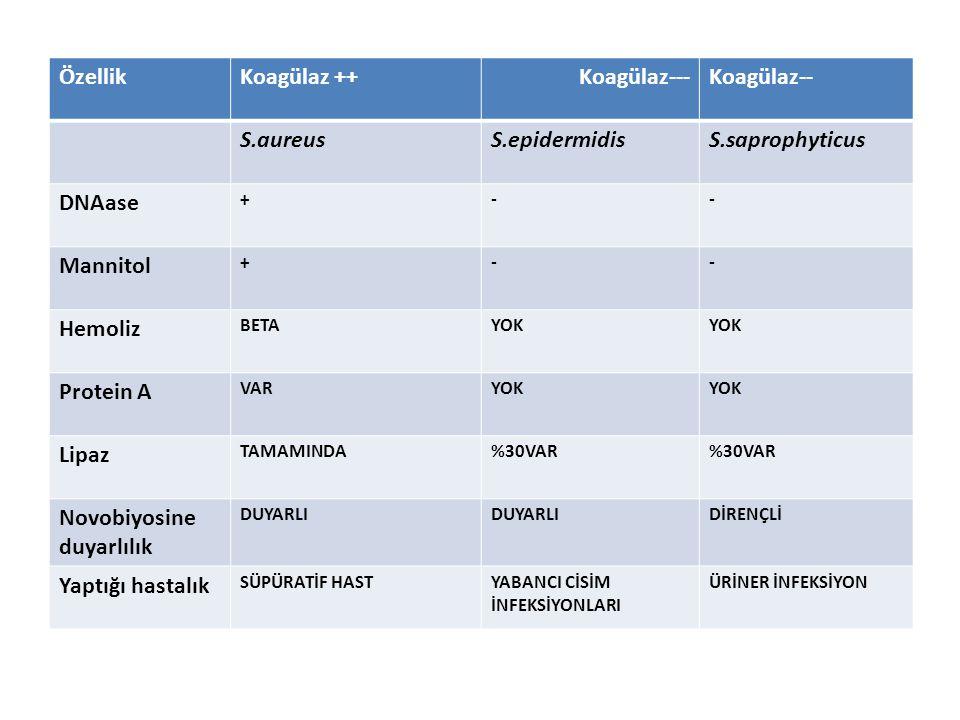 Novobiyosine duyarlılık Yaptığı hastalık
