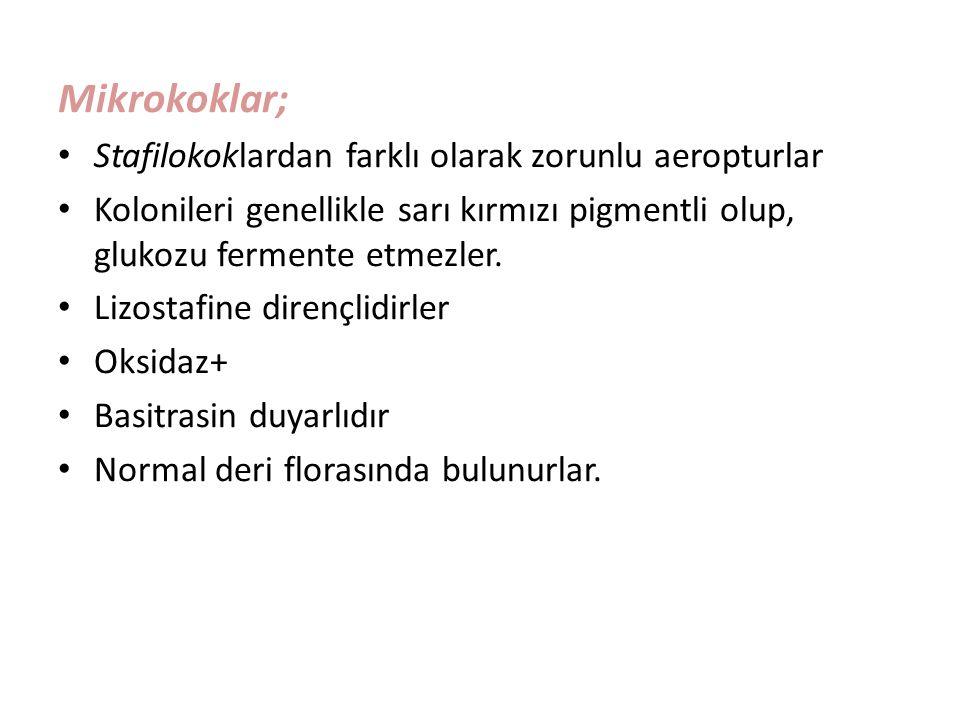Mikrokoklar; Stafilokoklardan farklı olarak zorunlu aeropturlar
