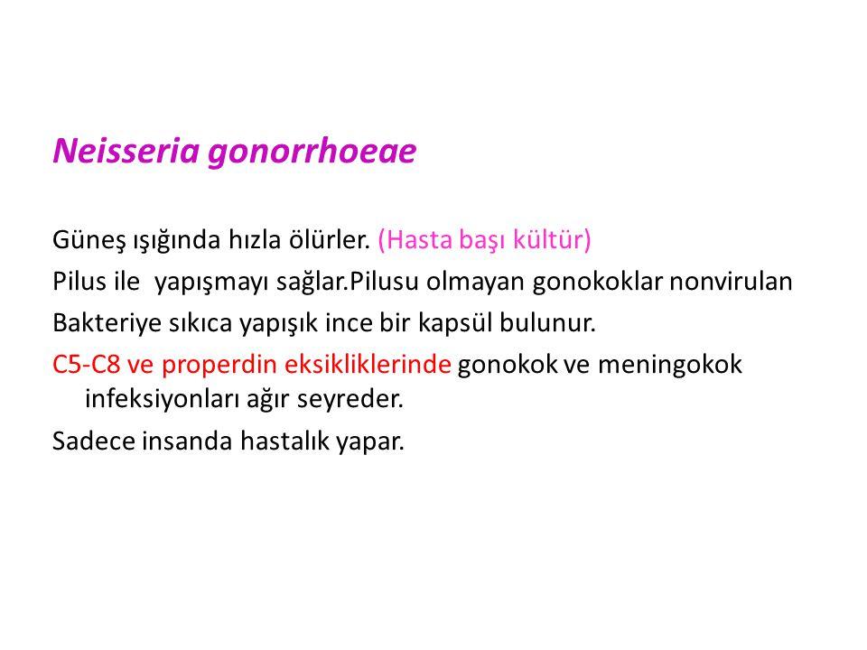 Neisseria gonorrhoeae