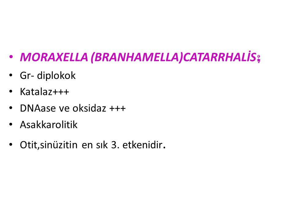 MORAXELLA (BRANHAMELLA)CATARRHALİS;