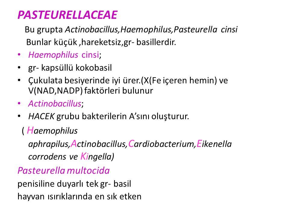PASTEURELLACEAE Pasteurella multocida