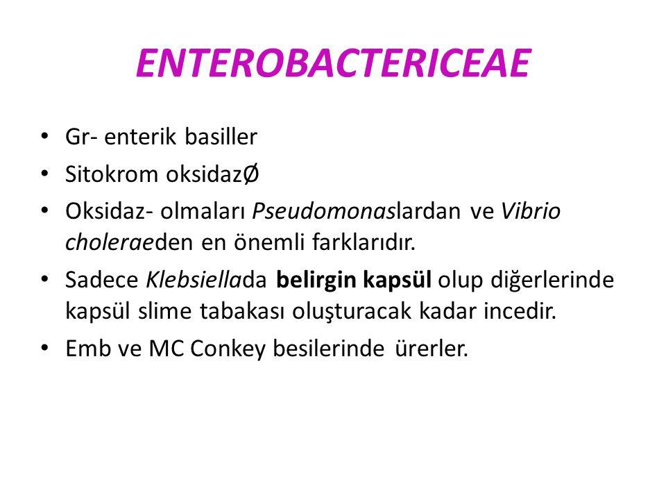 ENTEROBACTERICEAE Gr- enterik basiller Sitokrom oksidazØ