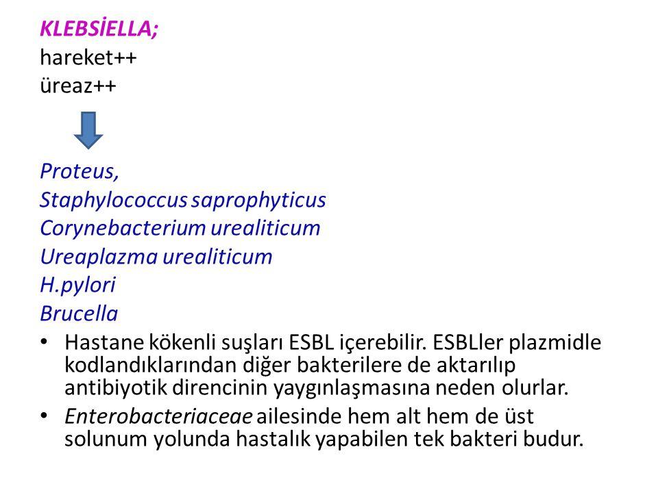 KLEBSİELLA; hareket++ üreaz++ Proteus, Staphylococcus saprophyticus. Corynebacterium urealiticum.