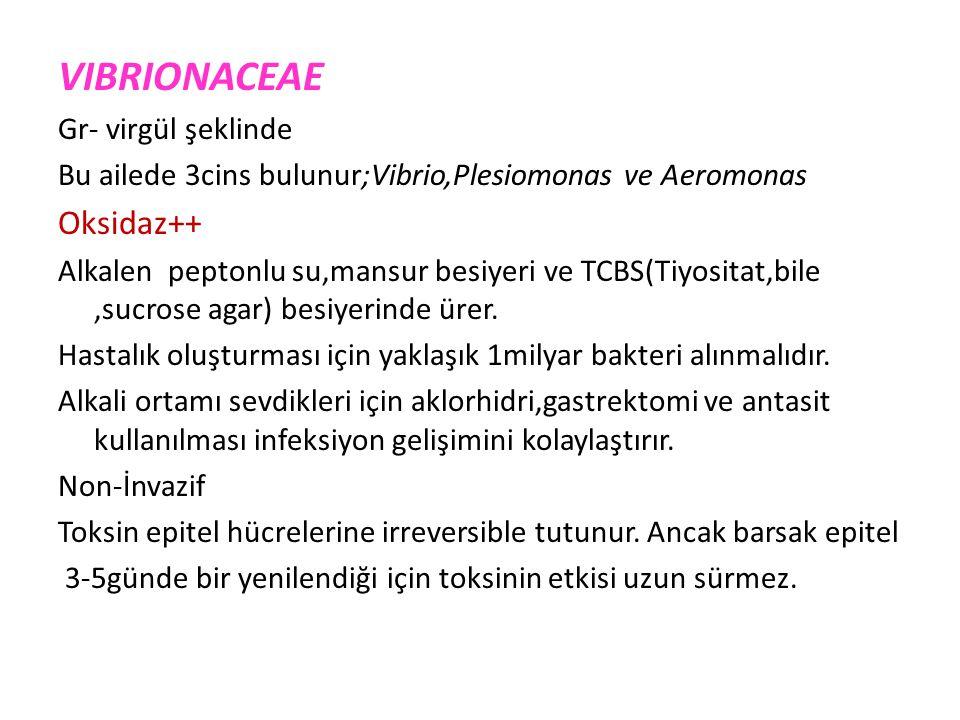 VIBRIONACEAE Oksidaz++ Gr- virgül şeklinde
