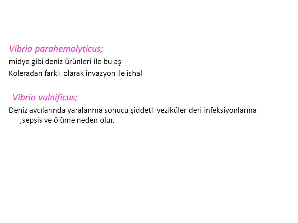 Vibrio parahemolyticus;