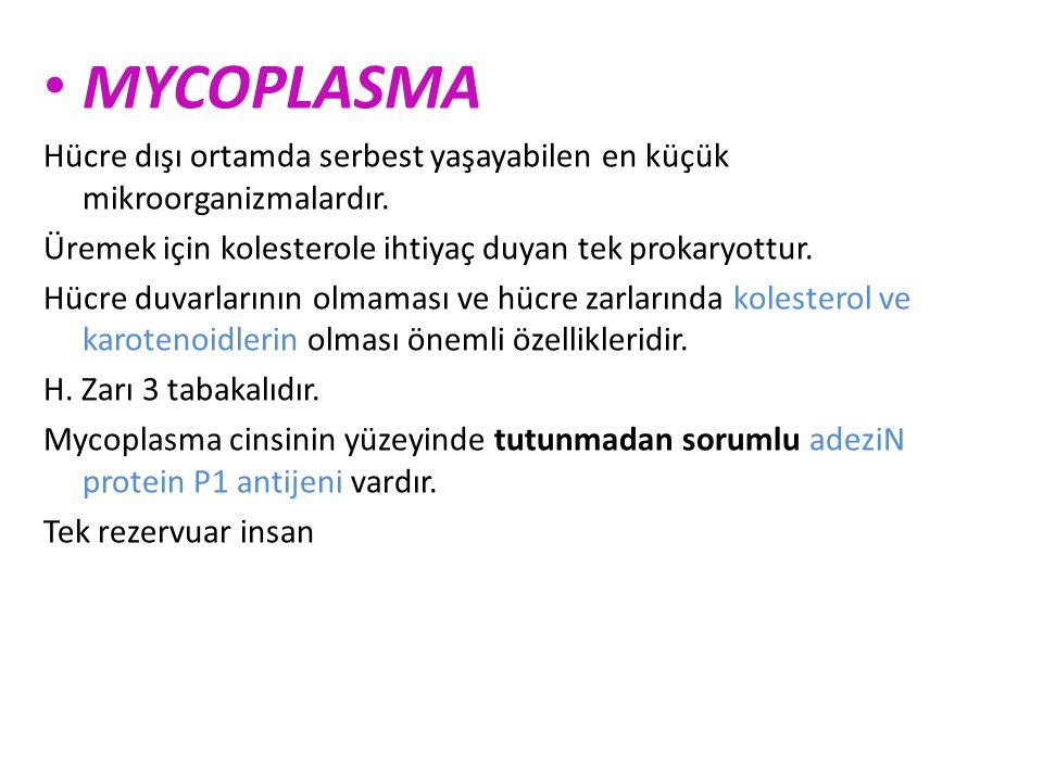 MYCOPLASMA Hücre dışı ortamda serbest yaşayabilen en küçük mikroorganizmalardır. Üremek için kolesterole ihtiyaç duyan tek prokaryottur.