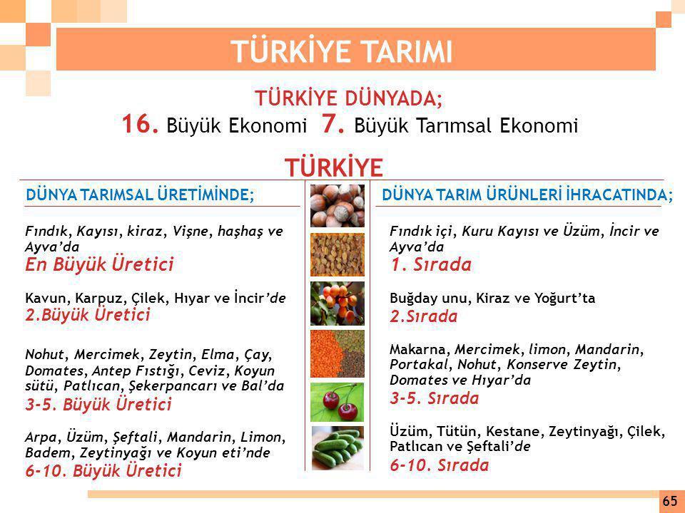16. Büyük Ekonomi 7. Büyük Tarımsal Ekonomi