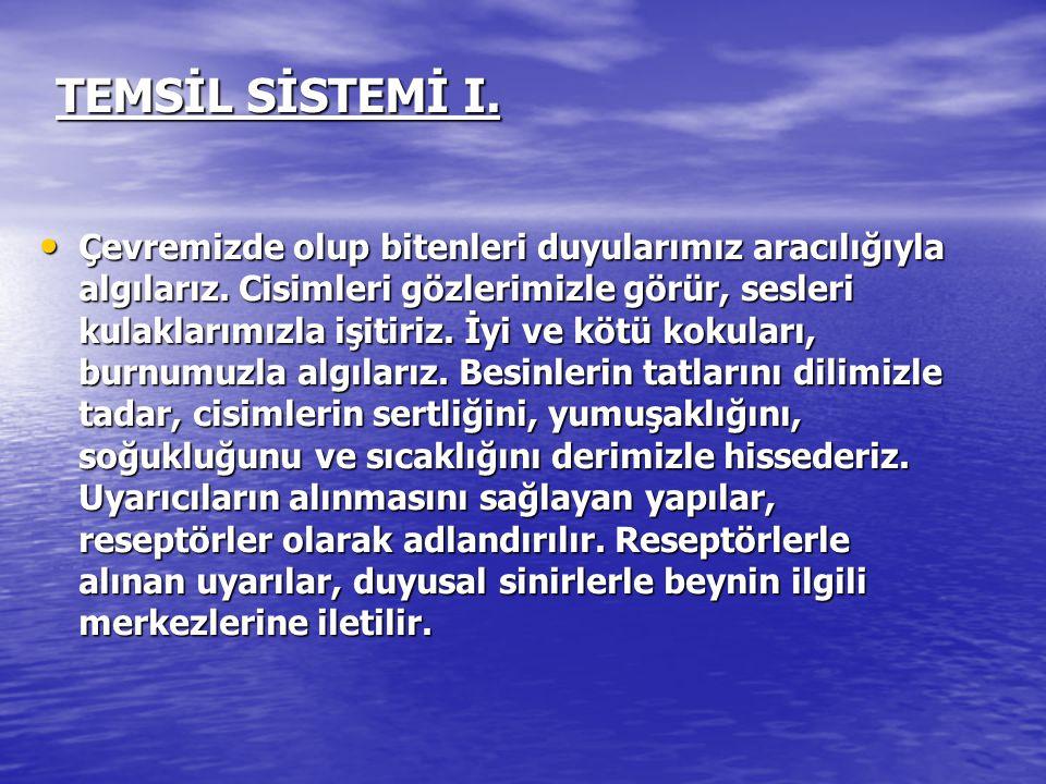 TEMSİL SİSTEMİ I.