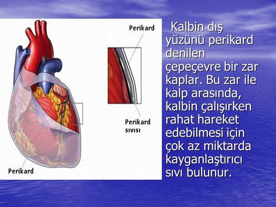 Kalbin dış yüzünü perikard denilen çepeçevre bir zar kaplar