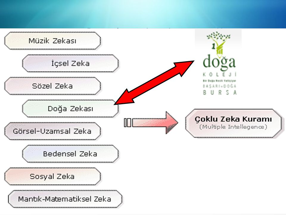 ÇOKLU ZEKA/ Multiple Intelligence