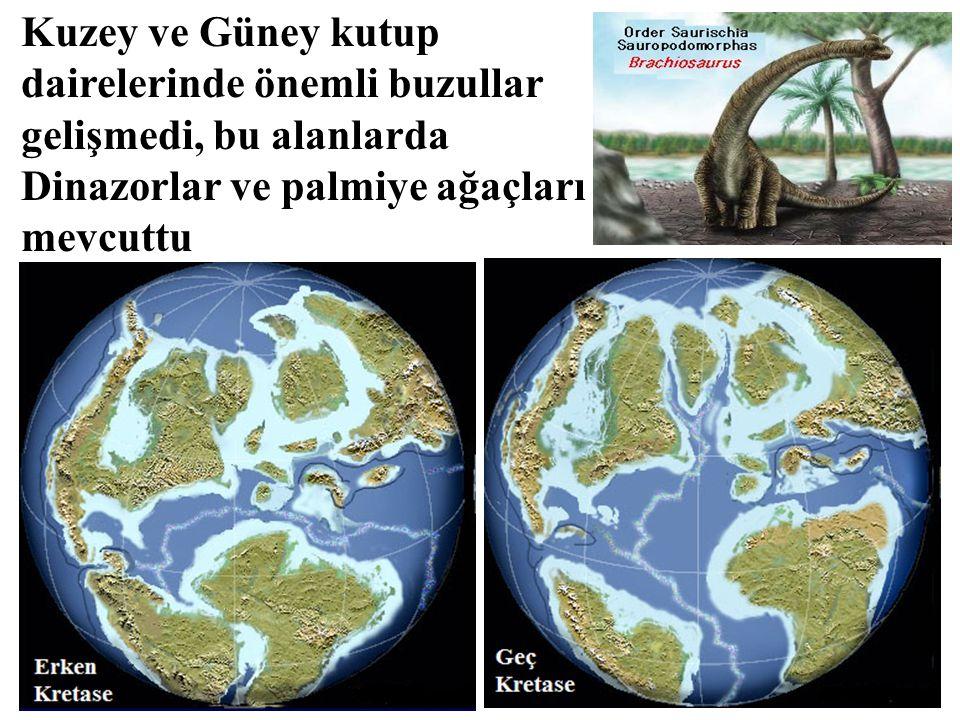 Kuzey ve Güney kutup dairelerinde önemli buzullar gelişmedi, bu alanlarda Dinazorlar ve palmiye ağaçları mevcuttu