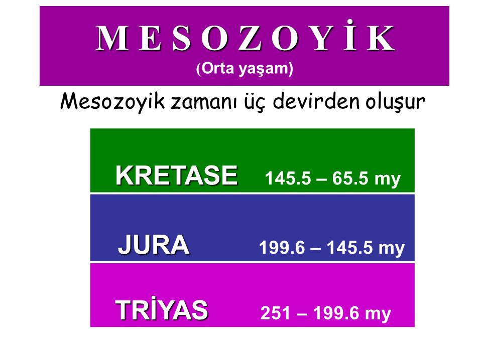 M E S O Z O Y İ K (Orta yaşam)