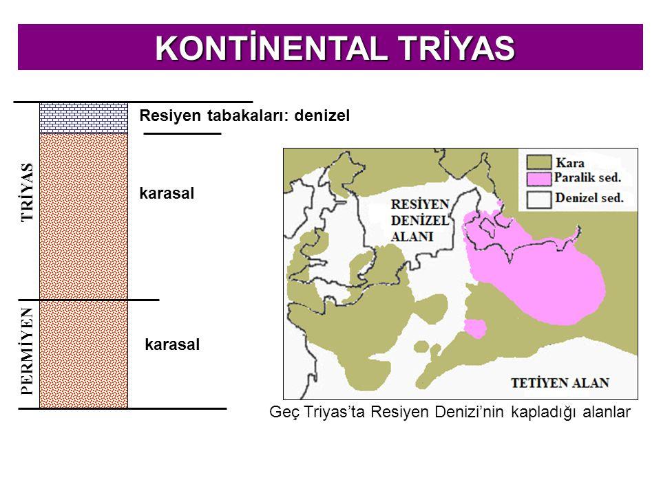 KONTİNENTAL TRİYAS Resiyen tabakaları: denizel TRİYAS karasal PERMİYEN