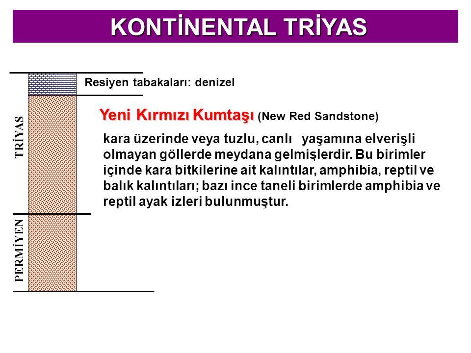 KONTİNENTAL TRİYAS Yeni Kırmızı Kumtaşı (New Red Sandstone)
