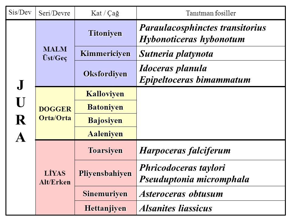 J U R A Paraulacosphinctes transitorius Hybonoticeras hybonotum