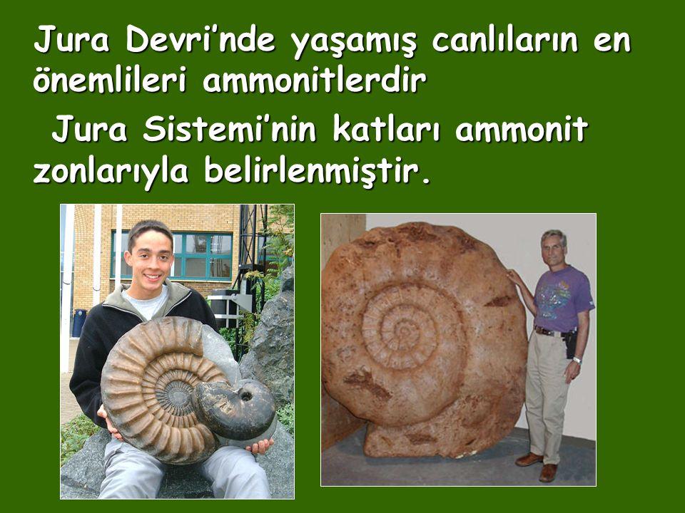 Jura Sistemi'nin katları ammonit zonlarıyla belirlenmiştir.