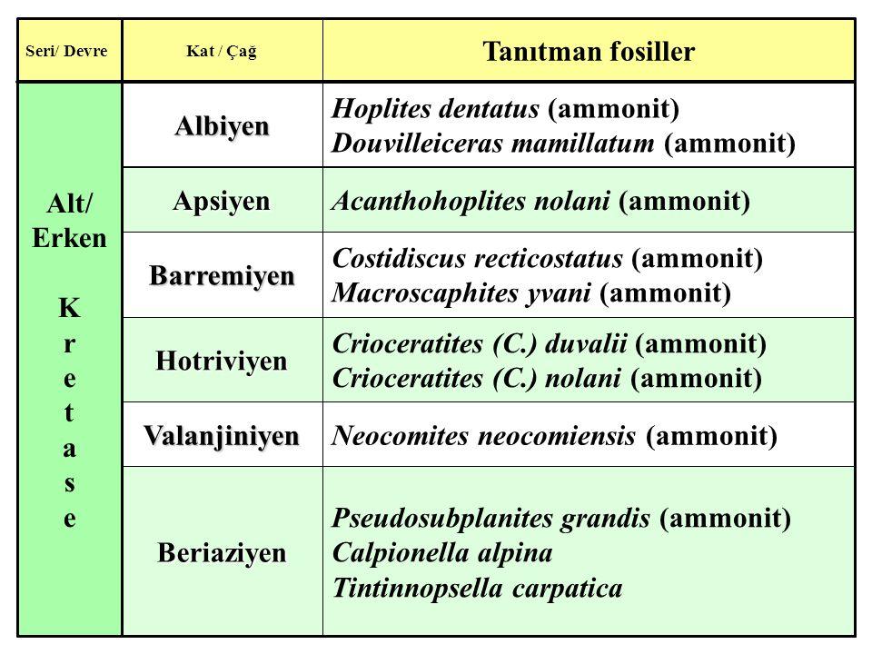 Hoplites dentatus (ammonit) Douvilleiceras mamillatum (ammonit)