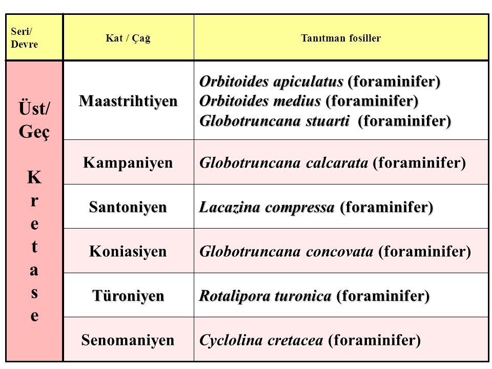 Üst/ Geç K r e t a s Cyclolina cretacea (foraminifer) Senomaniyen