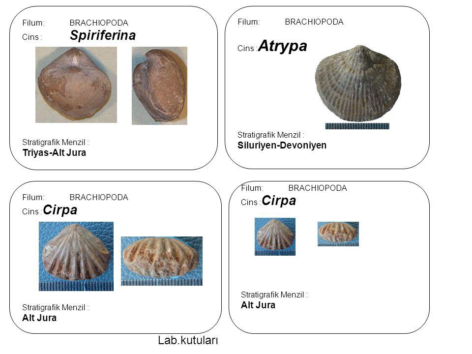 Lab.kutuları Triyas-Alt Jura Siluriyen-Devoniyen Alt Jura Alt Jura