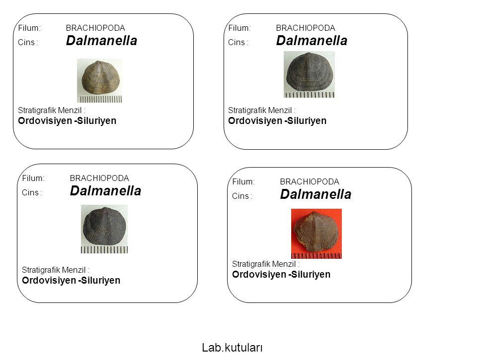 Lab.kutuları Ordovisiyen -Siluriyen Ordovisiyen -Siluriyen