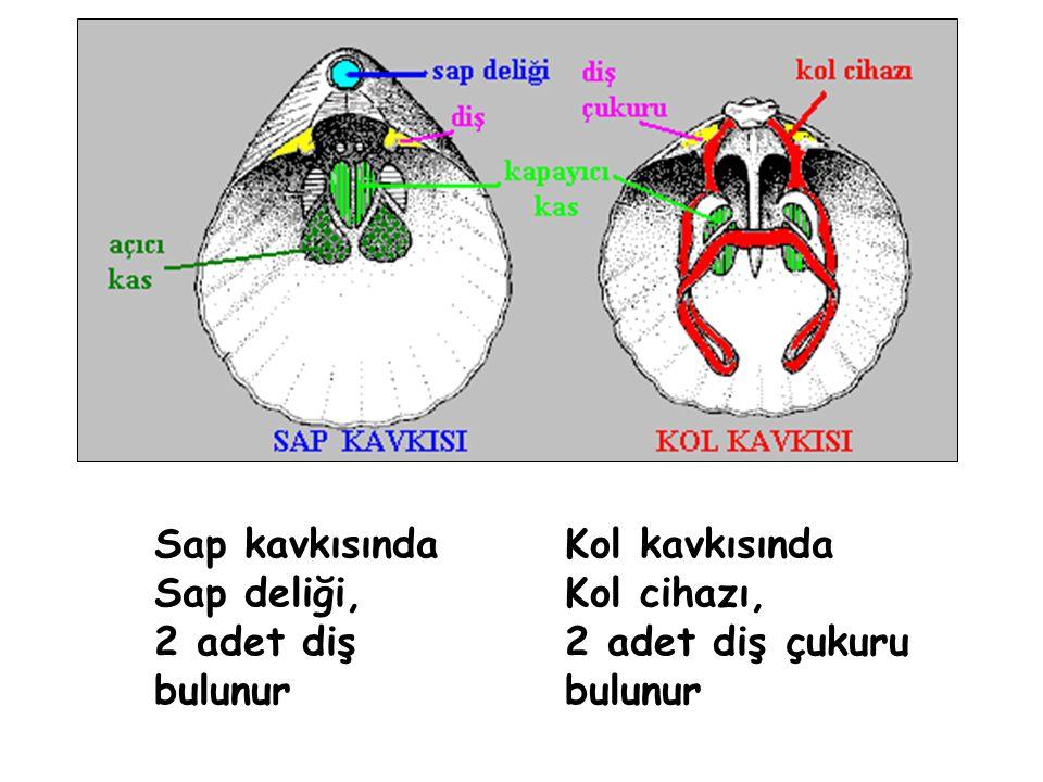 Sap kavkısında Sap deliği, 2 adet diş bulunur Kol kavkısında Kol cihazı, 2 adet diş çukuru bulunur