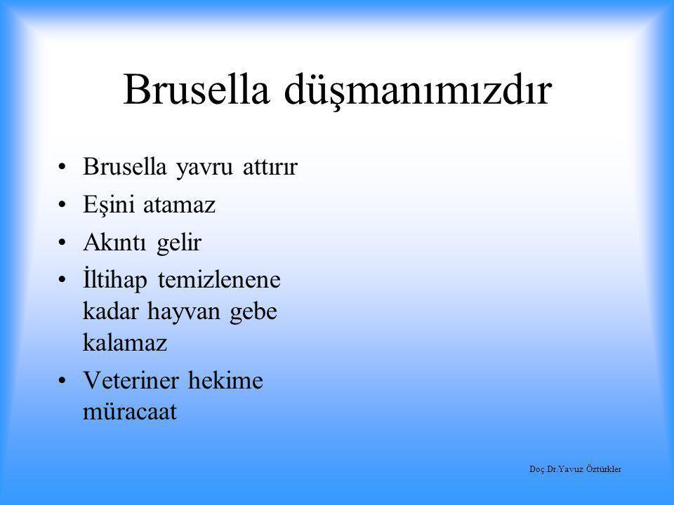 Brusella düşmanımızdır