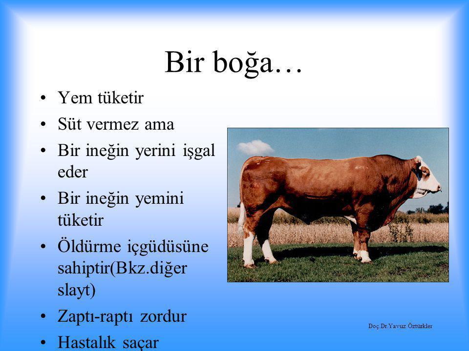 Bir boğa… Yem tüketir Süt vermez ama Bir ineğin yerini işgal eder
