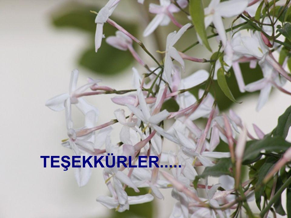 TEŞEKKÜRLER..... T.Döğeroğlu - 19 Ağustos 2008