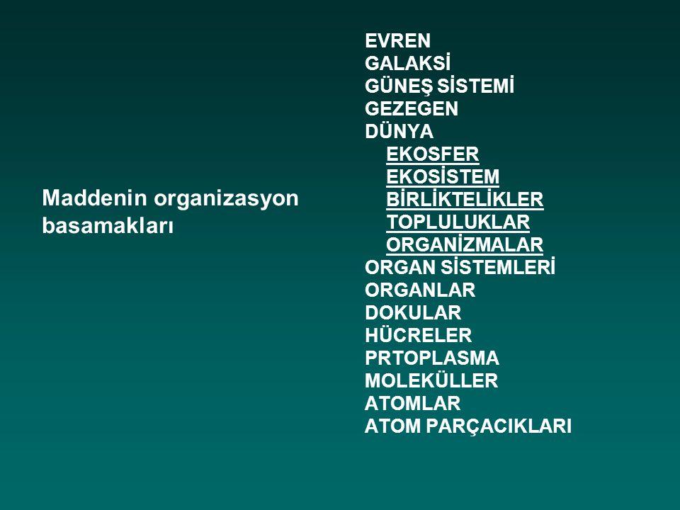 Maddenin organizasyon basamakları
