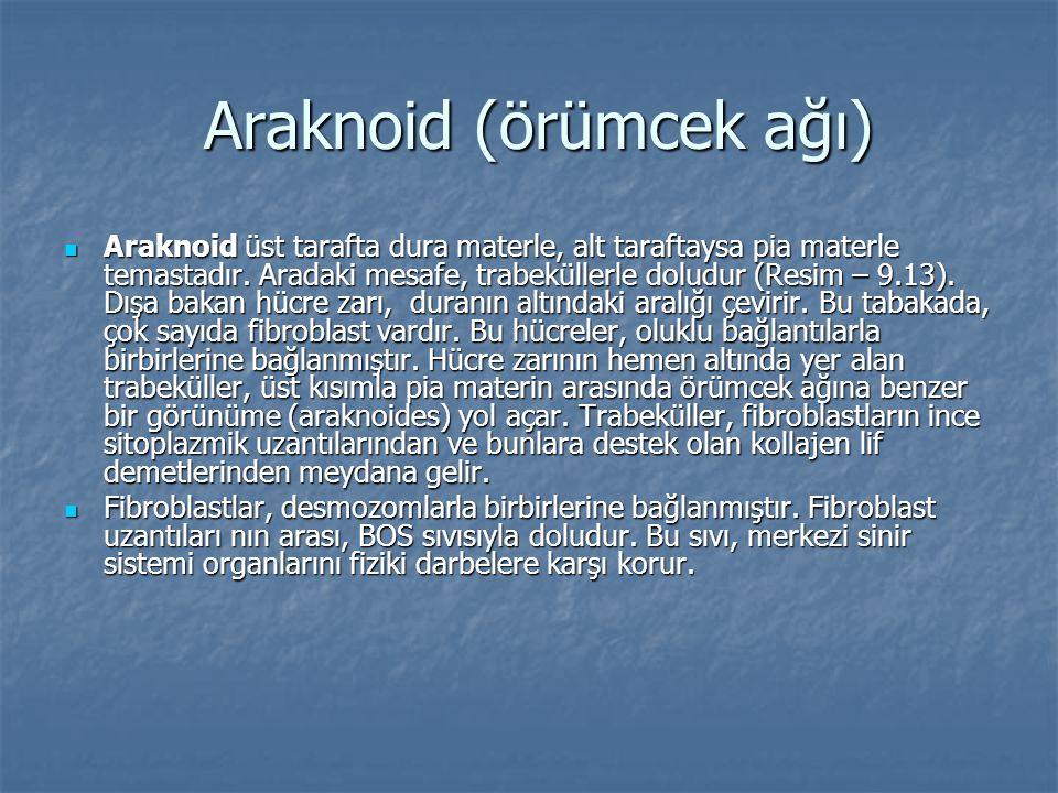 Araknoid (örümcek ağı)