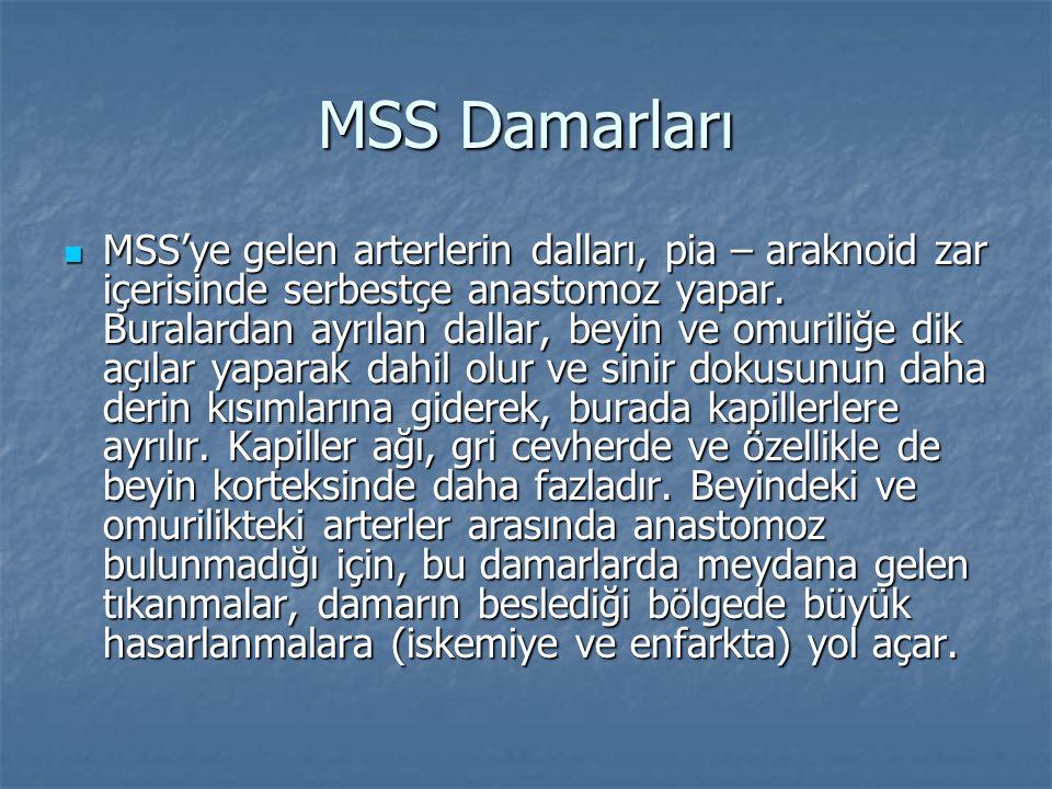 MSS Damarları