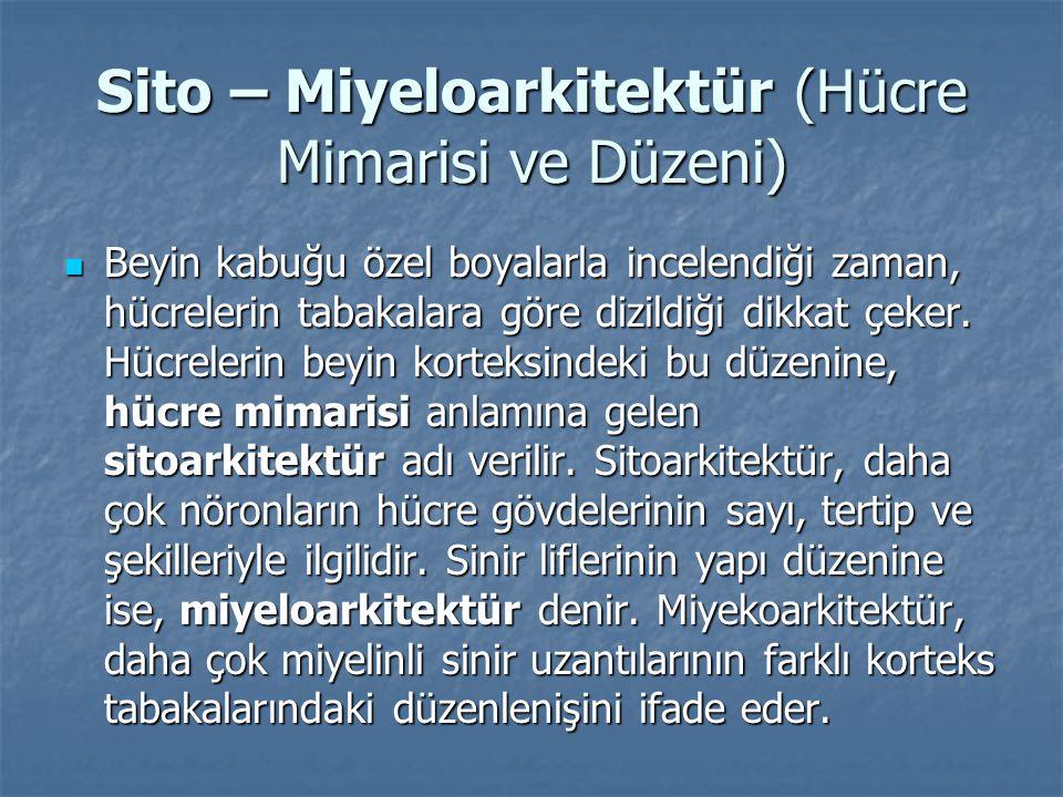 Sito – Miyeloarkitektür (Hücre Mimarisi ve Düzeni)